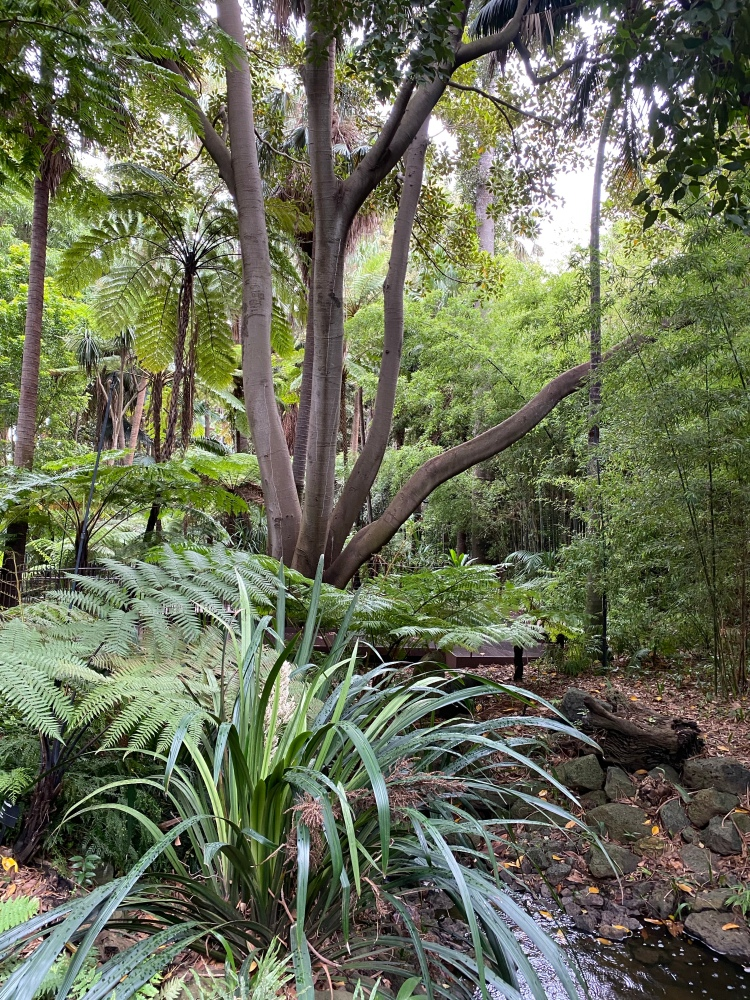 Fern Gully in the gardens