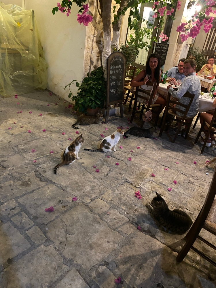 Everynight with the kitties