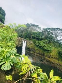 The amazing vegetation