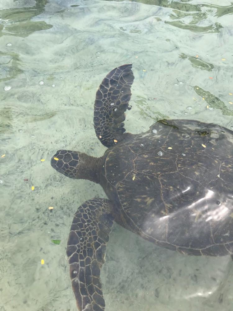 Help save the Sea Turtles